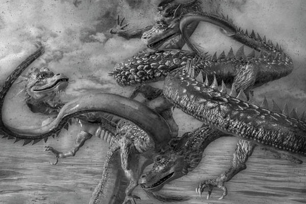Wall Art - Digital Art - Chinese Dragons In Black And White by Betsy Knapp