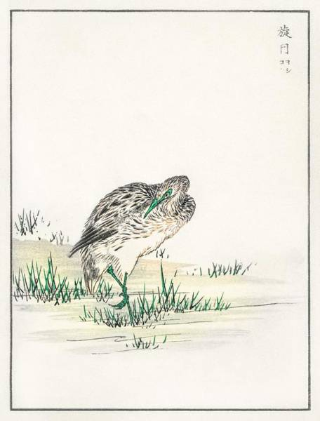 Wall Art - Painting - Chinese Little Bittern Illustration From Pictorial Monograph Of Birds  1885  By Numata Kashu  1838-1 by Celestial Images