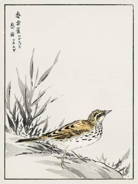 Wall Art - Painting - Chinese Tree-pipit And Wheat Illustration From Pictorial Monograph Of Birds  1885  By Numata Kashu   by Celestial Images