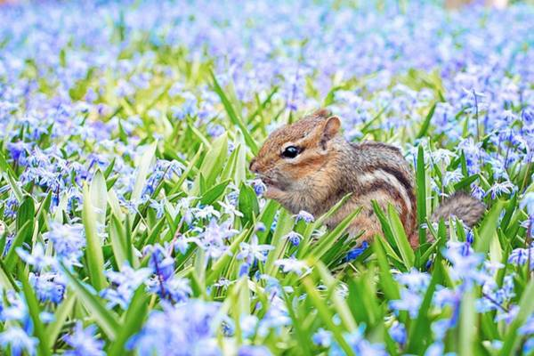 Photograph - Chipmunk On Flowers by Top Wallpapers