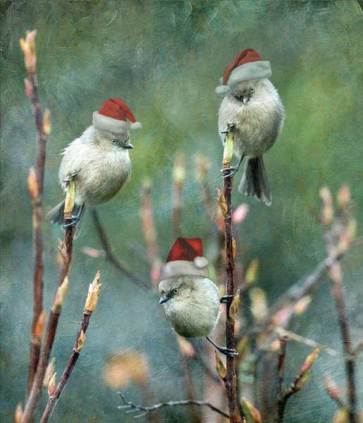 Wall Art - Photograph - Christmas Bushtits by Angie Vogel