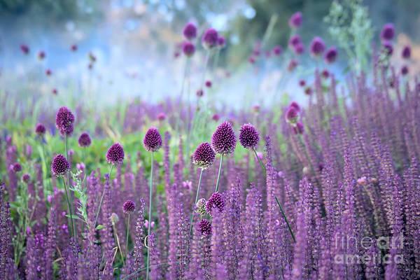 Wall Art - Photograph - Chive Herb Flowers - Allium by Tatiana Belova