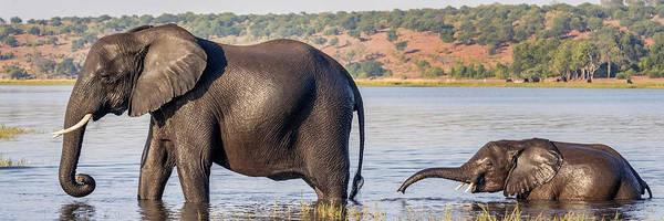 Wall Art - Photograph - Chobe River, Botswana, Africa by Karen Ann Sullivan