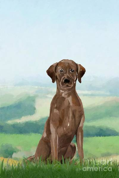 Furry Digital Art - Chocolate Labrador by John Edwards