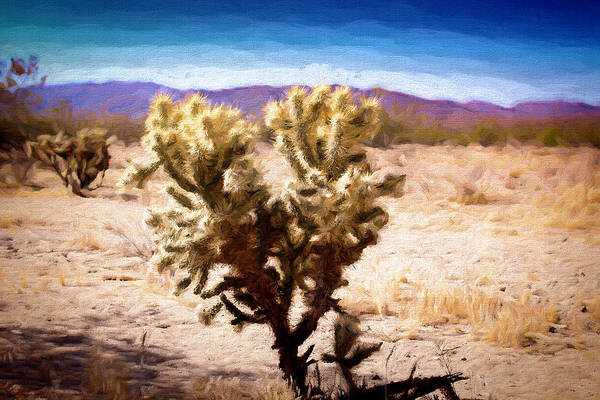 Photograph - Cholla Cactus by Alison Frank