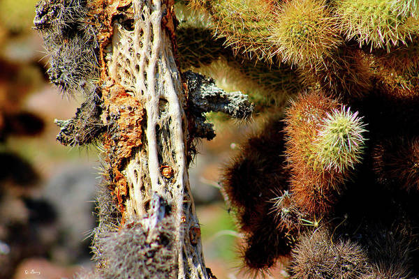 Cactus Mixed Media - Cholla Cactus by G Berry