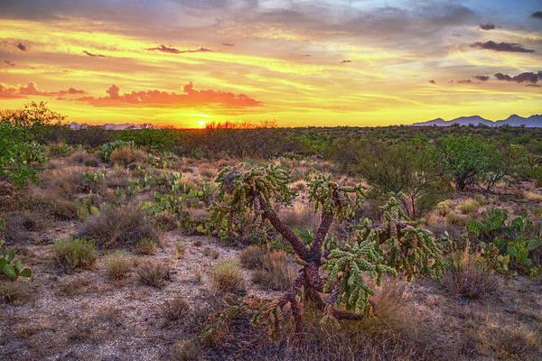 Photograph - Cholla Sunset, Tucson, Arizona by Chance Kafka