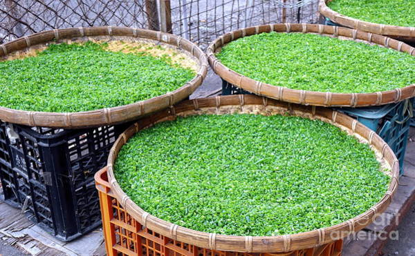 Scallion Photograph - Chopped Chives Drying In The Sun by Yali Shi
