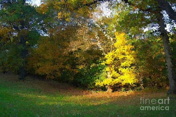 Digital Art - Chosen Tree In Van Gogh Style by Christopher Shellhammer