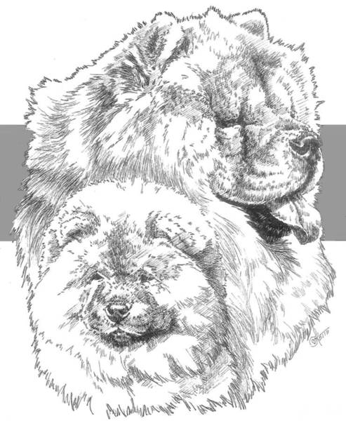 Drawing - Chow And Pup by Barbara Keith
