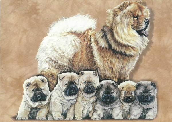 Drawing - Chow And Puppies Alteration by Barbara Keith