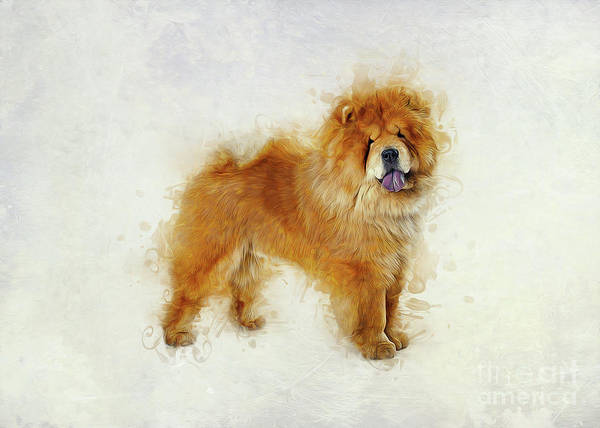 Furry Digital Art - Chow Chow by Ian Mitchell