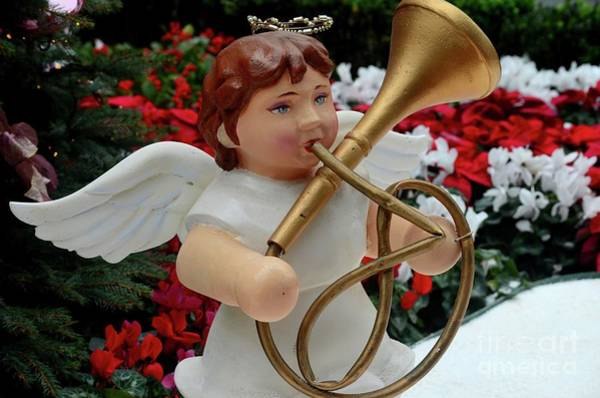 Photograph - Christmas Angel Statue Plays French Horn Trumpet Brass Music Instrument  by Imran Ahmed