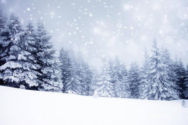 Fairytale Wall Art - Photograph - Christmas Background With Snowy Fir by Melinda Nagy