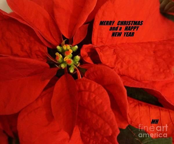 Wall Art - Photograph - Christmas Card Two by Marsha Heiken