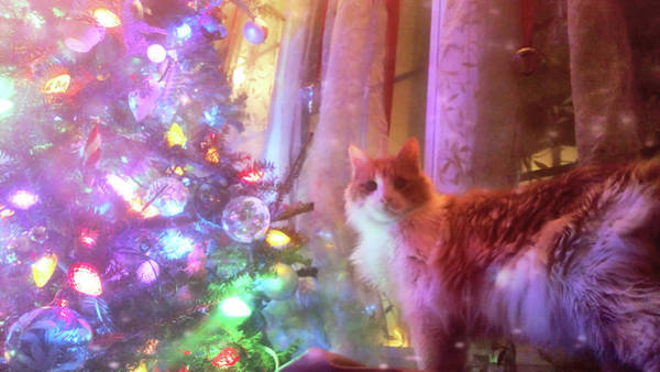 Photograph - Christmas Cutie by JAMART Photography