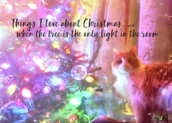 Photograph - Christmas Cutie Quote by Jamart Photography
