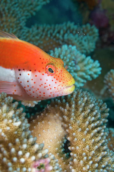 Underwater World Photograph - Christmas Island, Australia by Gallo Images