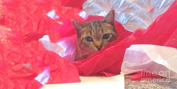 Photograph - Christmas Kitty by Barbara S Nickerson