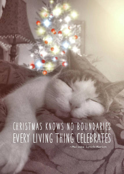 Photograph - Christmas Nap Quote by JAMART Photography