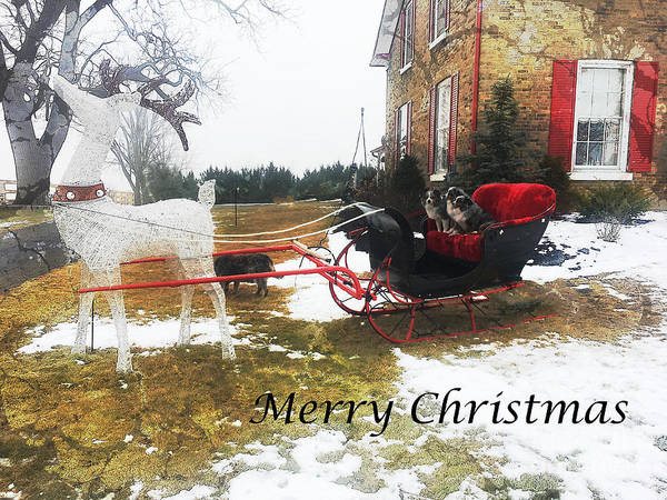 Photograph - Christmas Sleigh by Claire Bull