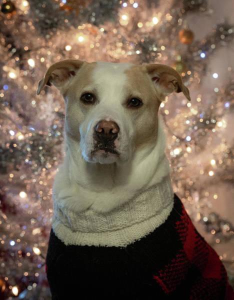 Photograph - Christmas Snofie by Lora J Wilson