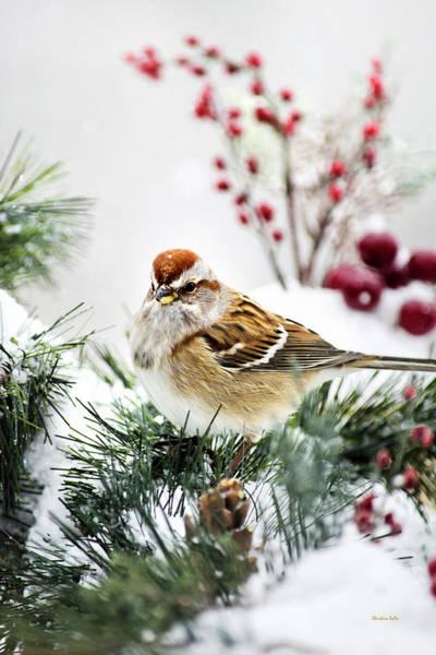 Photograph - Christmas Sparrow by Christina Rollo