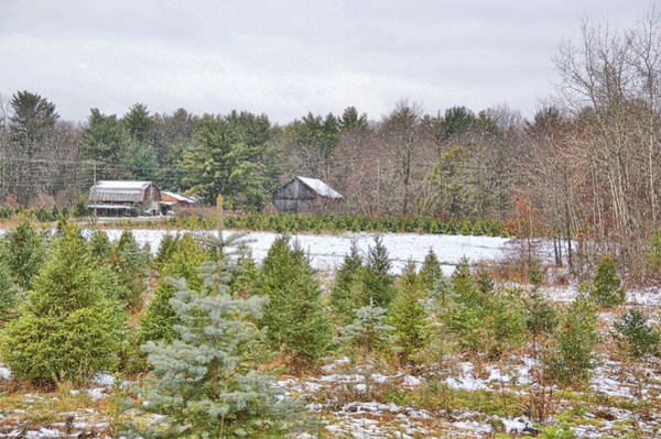 Photograph - Christmas Tree Farm by JAMART Photography