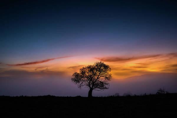 Photograph - Chrysalis by Alexander Kunz