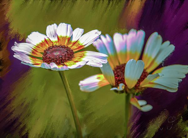 Photograph - Chrysanthemum Carinatum #i9 by Leif Sohlman