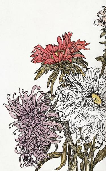 Wall Art - Painting - Chrysanthemums By Julie De Graag  1877-1924  by Celestial Images