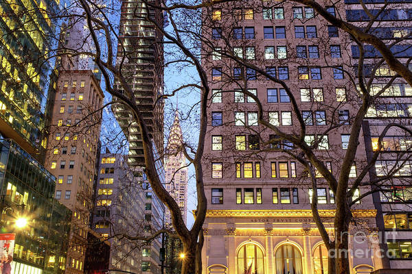 Photograph - Chrysler Building Through The Trees At Night New York City by John Rizzuto
