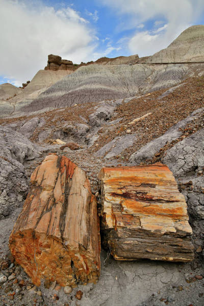 Photograph - Chunks Of Petrified Wood In Blue Mesa by Ray Mathis