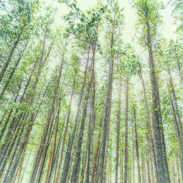 Wall Art - Photograph - Church Of Trees by Eric Glaser
