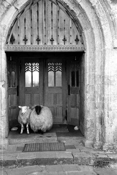 Church Photograph - Church Sheep by Maurice Ambler