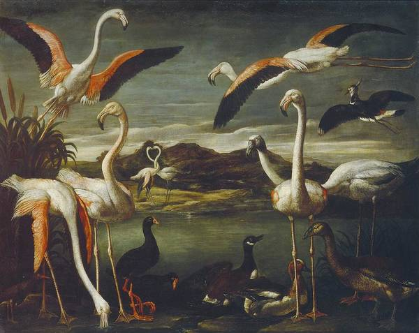 Wall Art - Painting - Cinatti  Antonio  Active 1609-1635 Landscapes With Exotic Birds Rome, C. 1630 2 by Celestial Images