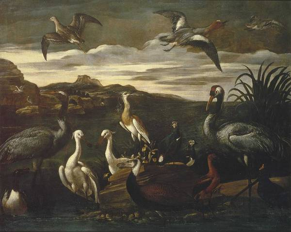 Wall Art - Painting - Cinatti  Antonio  Active 1609-1635 Landscapes With Exotic Birds Rome, C. 1630 3 by Celestial Images
