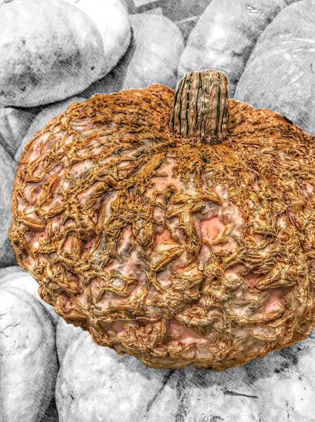 Photograph - Cinderella's Gold Lace Pumpkin by Marianna Mills