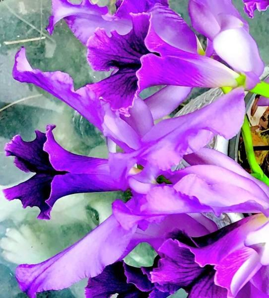 Photograph - Cindys  Cattleya Orchids Aloha  by Joalene Young