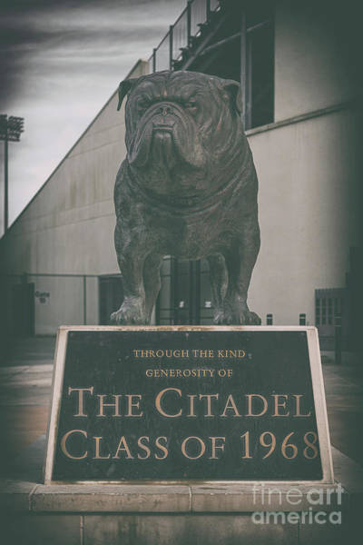Photograph - Citadel Mascot - Bulldog by Dale Powell