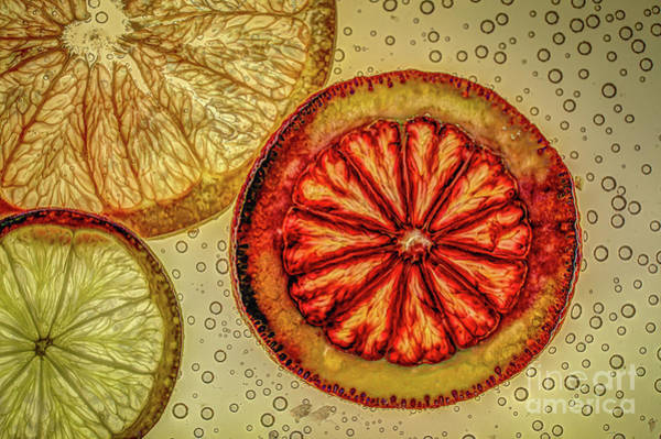 Photograph - Citrus Light by Roger Monahan