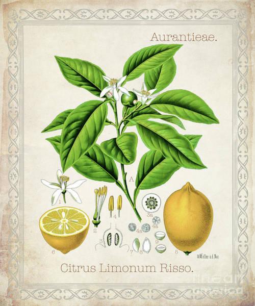 Wall Art - Digital Art - Citrus Limonum Risso by Jean Plout