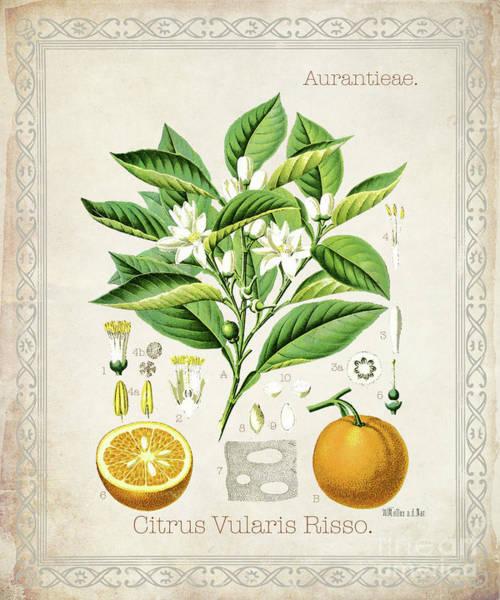 Wall Art - Digital Art - Citrus Vularis Risso by Jean Plout