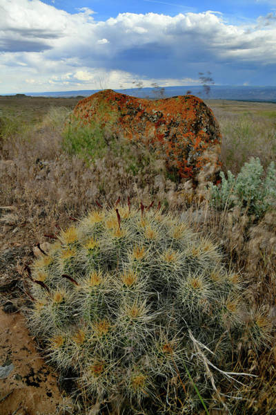 Photograph - Clarion Cactus In Book Cliffs by Ray Mathis