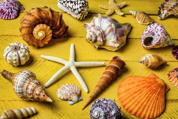 Wall Art - Photograph - Classic Seashell Collection by Garry Gay