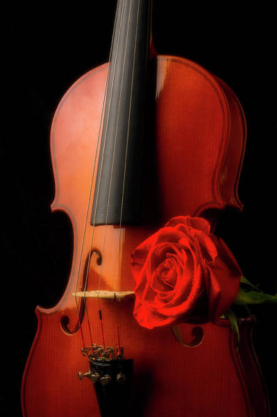 Wet Rose Wall Art - Photograph - Classic Violin And Red Rose by Garry Gay