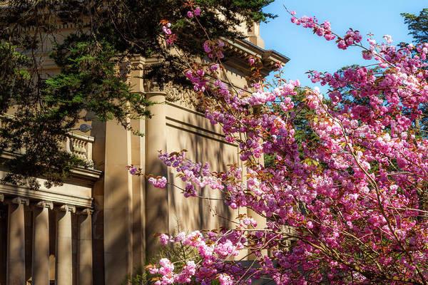 Photograph - Classical Sakura by Bonnie Follett