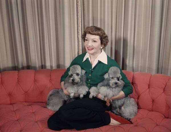 Poodle Photograph - Claudette by Hulton Archive