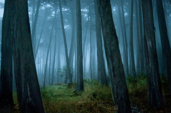 Clearing In Cypress Tree Forest Art Print by Siri Stafford
