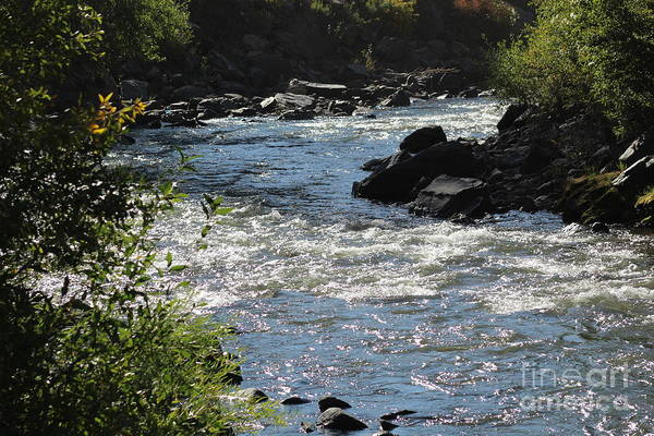 Photograph - Clearview Stream I by Tammie J Jordan
